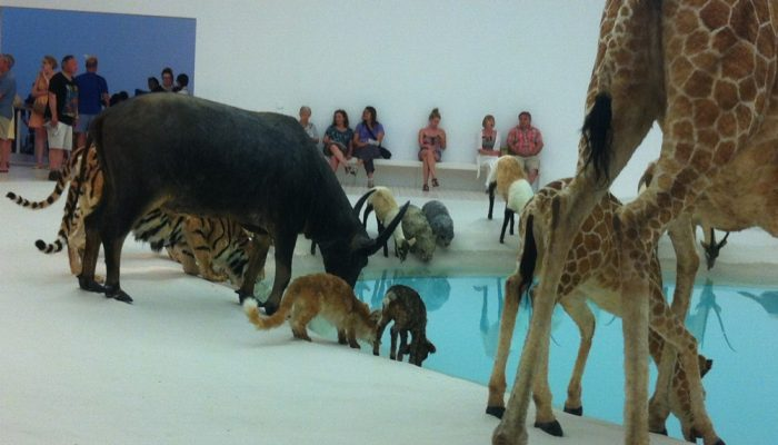 GOMA: The 99 animals are carefully placed around the lagoon